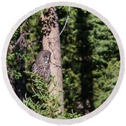 Round Beach Towel featuring the photograph B50 by Joshua Able's Wildlife