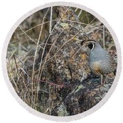 Round Beach Towel featuring the photograph B53 by Joshua Able's Wildlife