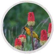 Round Beach Towel featuring the photograph B56 by Joshua Able's Wildlife