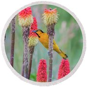 Round Beach Towel featuring the photograph B59 by Joshua Able's Wildlife
