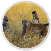 Baboons In Botswana Round Beach Towel