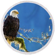Backlit Bald Eagle In Squamish Round Beach Towel