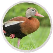 Balancing Black Bellied Whistling Duck Round Beach Towel
