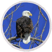 Bald Eagle And Blue Sky Round Beach Towel