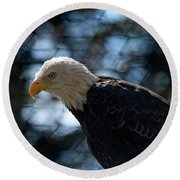 Bald Eagle Grandfather Mountain Round Beach Towel