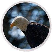 Bald Eagle Grandfather Mountain Round Beach Towel