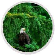Bald Eagle In Temperate Rainforest Alaska Endangered Species Round Beach Towel
