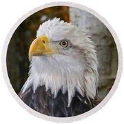 Bald Eagle Portrait Round Beach Towel