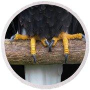 Bald Eagle Talons Round Beach Towel