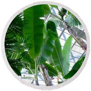 Banana Leaves In The Greenhouse Round Beach Towel