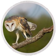 Barn Owl 5151801 Round Beach Towel