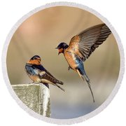 Barn Swallow Conversation Round Beach Towel