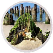 Round Beach Towel featuring the photograph Beached Walrus At Cape Charles Virginia by Bill Swartwout Fine Art Photography