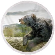 Bear In Tree At Smoky Mountains Park Round Beach Towel