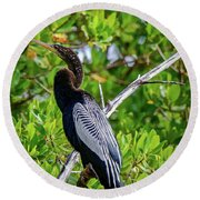 Beautiful Anhinga Round Beach Towel