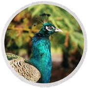 Beautiful Colourful Peacock Outdoors In The Daytime. Round Beach Towel