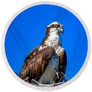 Beautiful Osprey Round Beach Towel