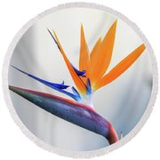 Beauty In Paradise Round Beach Towel