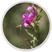 Bee Flying Towards Ultra Violet Texas Ranger Flower Round Beach Towel