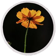 Round Beach Towel featuring the photograph Behind Light And Shadow by Dale Kincaid