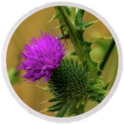 Between The Flower And The Thorn Round Beach Towel