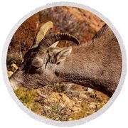 Round Beach Towel featuring the photograph Big Horn Sheep 2, Zion by Dawn Richards