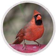 Bird Bath Cardinal Round Beach Towel