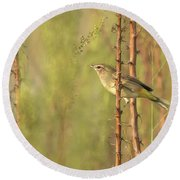 Bird On Branch Round Beach Towel