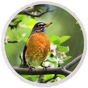 Birds - American Robin - Nature's Alarm Clock Round Beach Towel