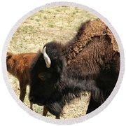 Bison In North Dakota Round Beach Towel