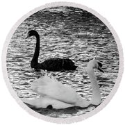 Black And White Swans Round Beach Towel