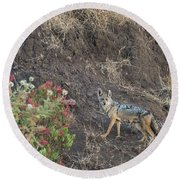 Round Beach Towel featuring the photograph Black Backed Jackal by Alex Lapidus