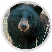 Black Bear Closeup Round Beach Towel