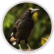 Black Currawong Bird Round Beach Towel