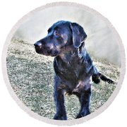 Black Labrador Retriever - Daisy Round Beach Towel