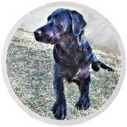 Black Labrador Retriever - Daisy Round Beach Towel