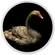 Black Swan On Black  Round Beach Towel