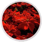 Blood Red Poinsettias Riot -  Round Beach Towel