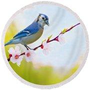 Blue Jay On Cherry Tree Round Beach Towel