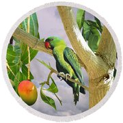 Blue-naped Parrot In Mango Tree Round Beach Towel