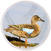 Blue-winged Teal Female Duck Round Beach Towel