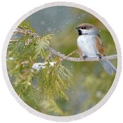 Boreal Chickadee In Winter Round Beach Towel