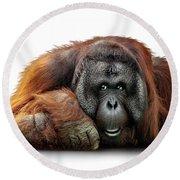 Bornean Orangutan Lying Down Extracted Round Beach Towel