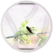 Round Beach Towel featuring the photograph Boxelder Bug In Morning Haze by Colleen Cornelius