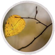 Round Beach Towel featuring the photograph Bright Fall Leaf 10 by Michael Arend