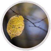 Round Beach Towel featuring the photograph Bright Fall Leaf 3 by Michael Arend