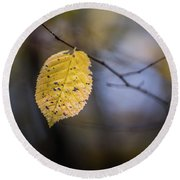 Round Beach Towel featuring the photograph Bright Fall Leaf 5 by Michael Arend