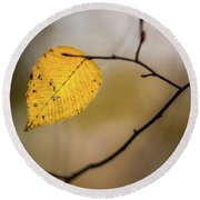 Round Beach Towel featuring the photograph Bright Fall Leaf 9 by Michael Arend
