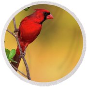Bright Red Cardinal Round Beach Towel