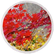 Brilliant Fall Color Round Beach Towel